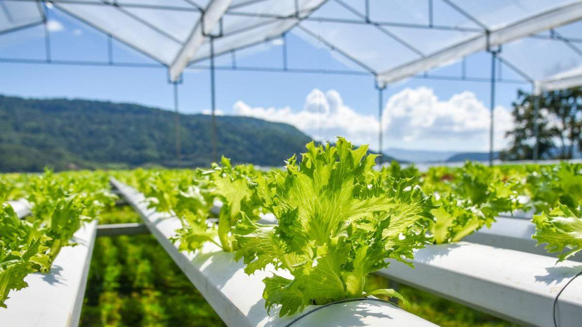 Normativa-agricoltura-biologica